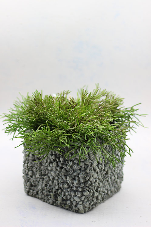 Square Barnacle Textured Pot