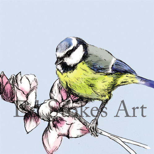 Blue Tit on Magnolia