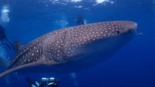 タイ タオ島ダイビングツアー2018.04.28〜05.06