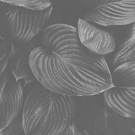 leaf_2 cópia.jpg