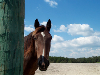 Anhydrosis ~ The Non-Sweating / Not-Sweating Enough Horse