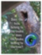 TreeSnek