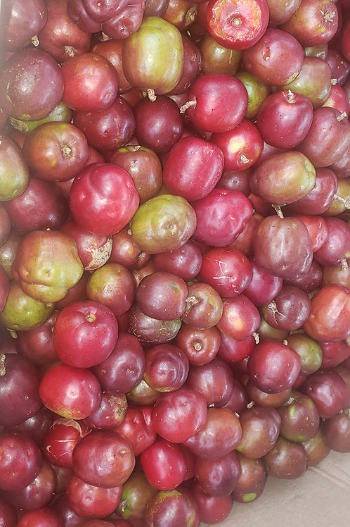 Scarlet Plums  (Sold as 4 units)