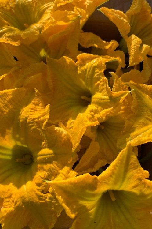 Organic Squash Blossoms