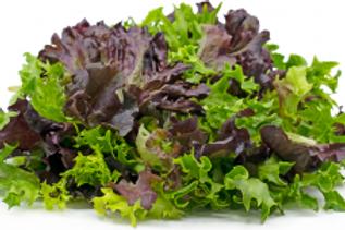 Lucayan Tropical Mixed Lettuce