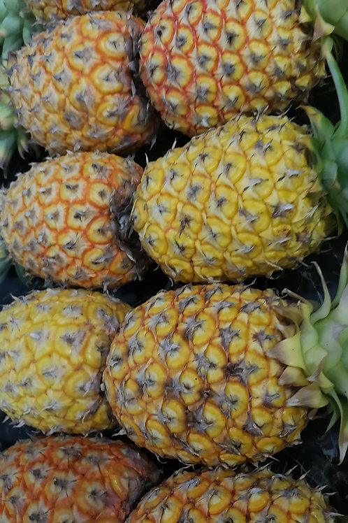 Sugar Loaf Pineapples (Grown on Andros)