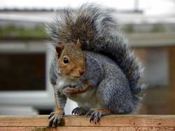 Squirrel's