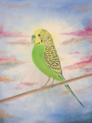 The Pudgie Budgie