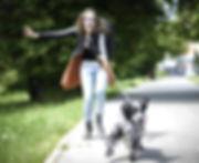 wix pulling dog_edited_edited.jpg