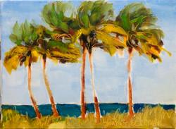 Cinque Palme Fort Lauderdale Beach