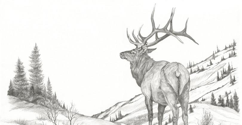 Elk Drawing