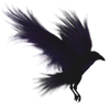 kisspng-bird-flight-common-raven-america