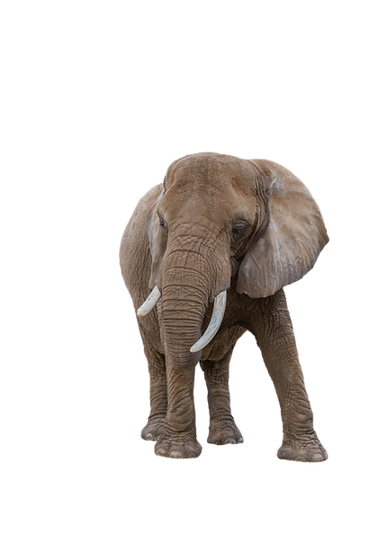 Elephant - 8.png