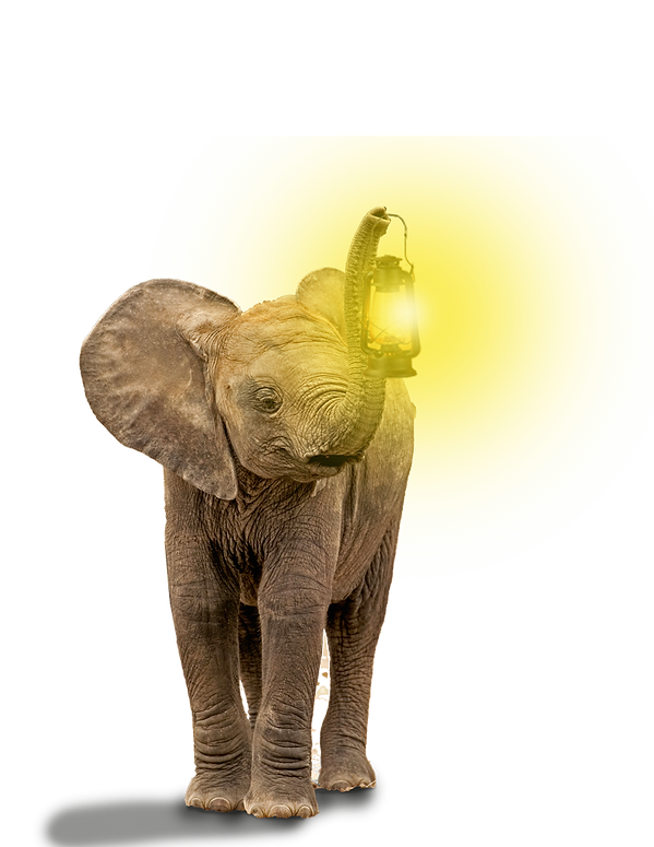 home-page-elephant-small.png