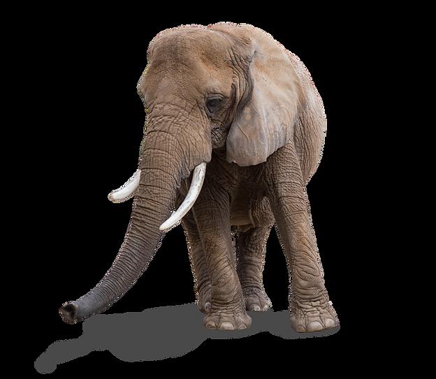 adopt technologies elephant