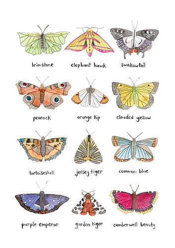 Butterflies and Moths Print