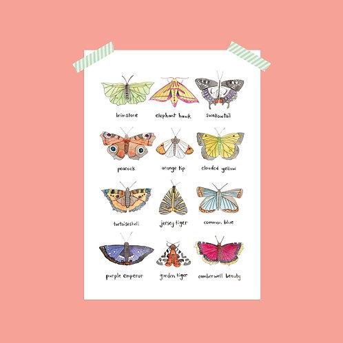 British Butterflies and Moths Print