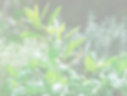 Herbfresh-Thumbnail_edited.png