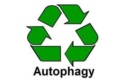Autophagy.jpg