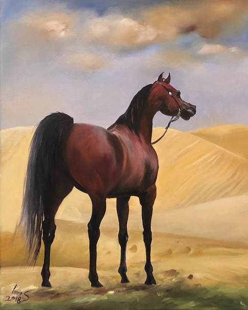 Arabian #38