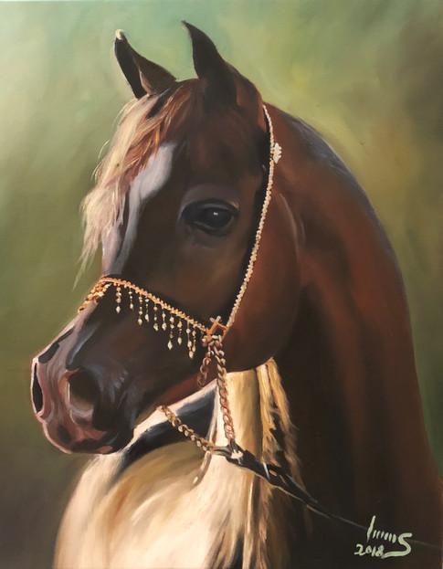 Arabian #14