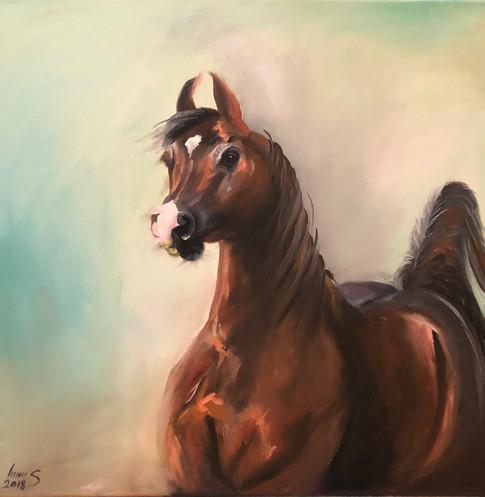 Arabian #42