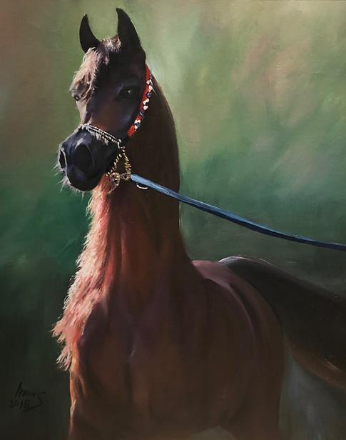 Arabian #27