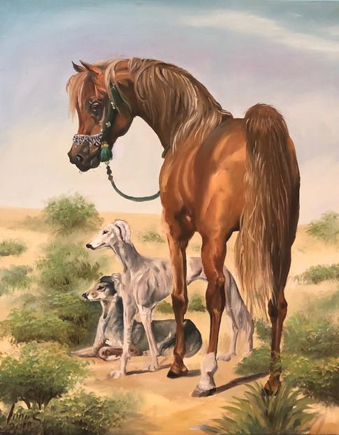 Arabian #35