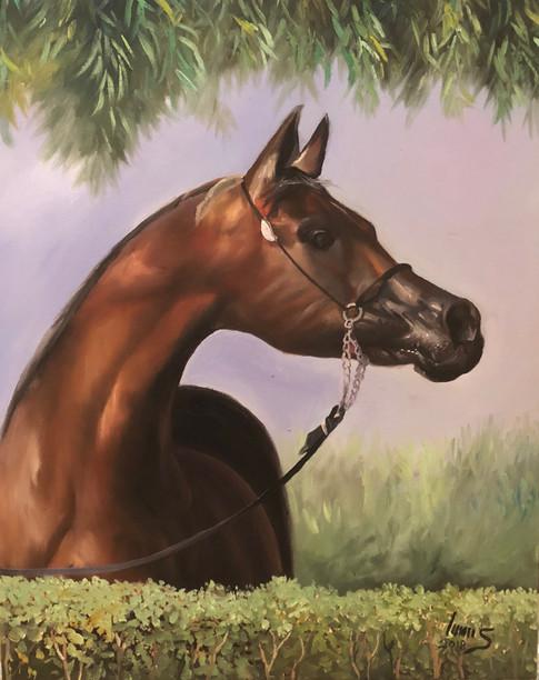 Arabian #16