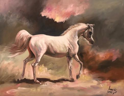 Arabian #7