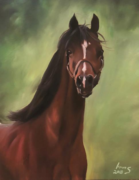Arabian #10