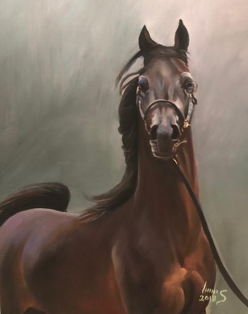 Arabian #15