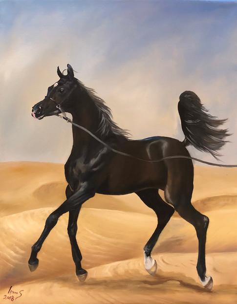 Arabian #37