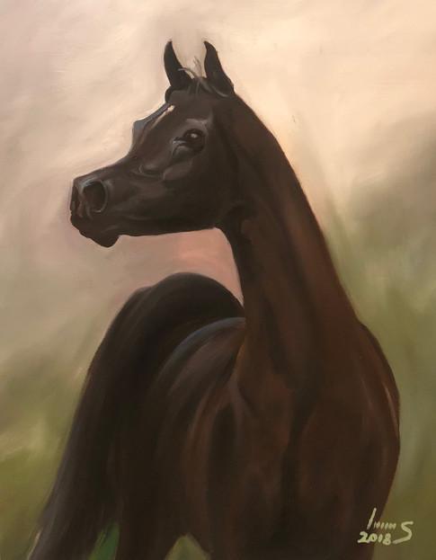 Arabian #12