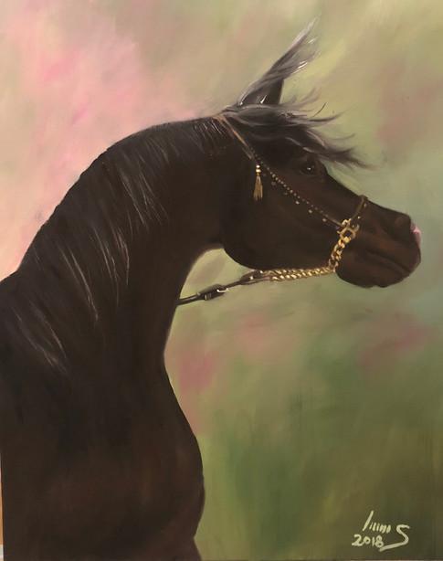 Arabian #11