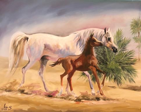 Arabian #34