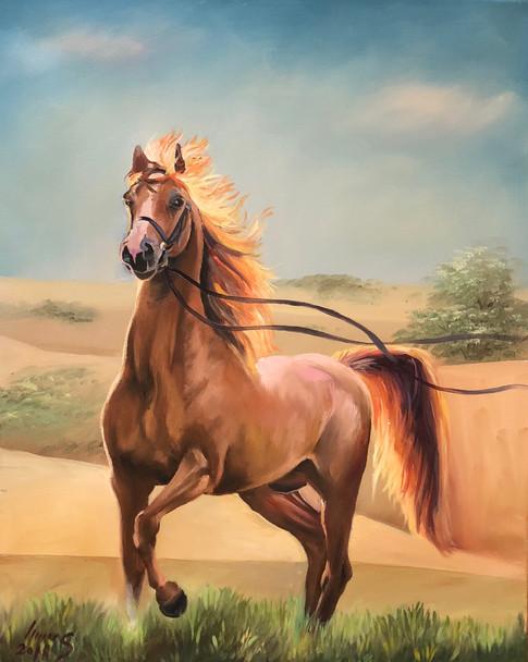 Arabian #39