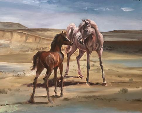 Arabian #8