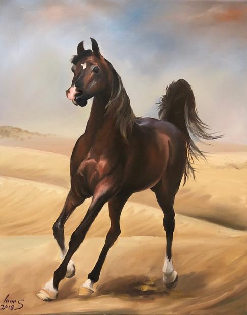Arabian #36