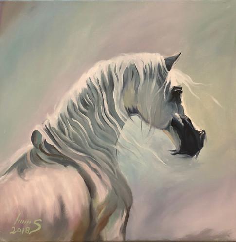 Arabian #6