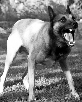 DogBite-BW.png