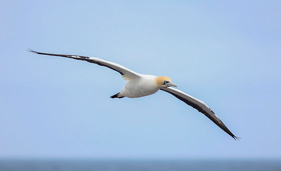bird Paul Collins.jpg
