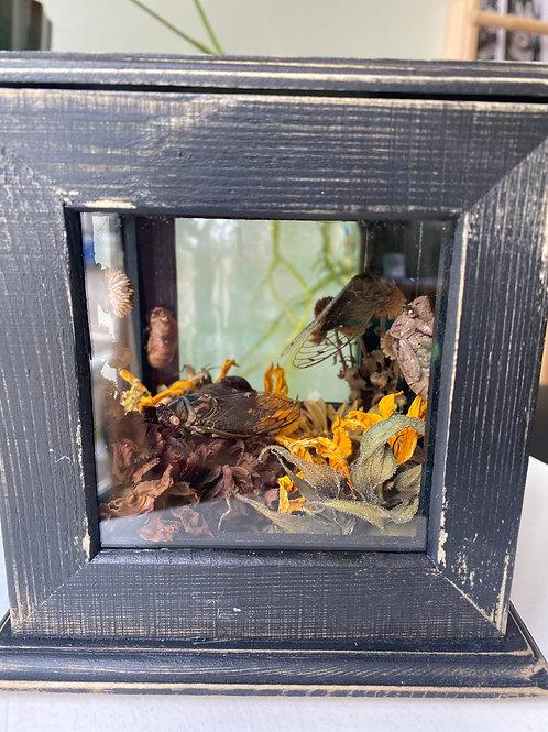 Cicadas // curio box