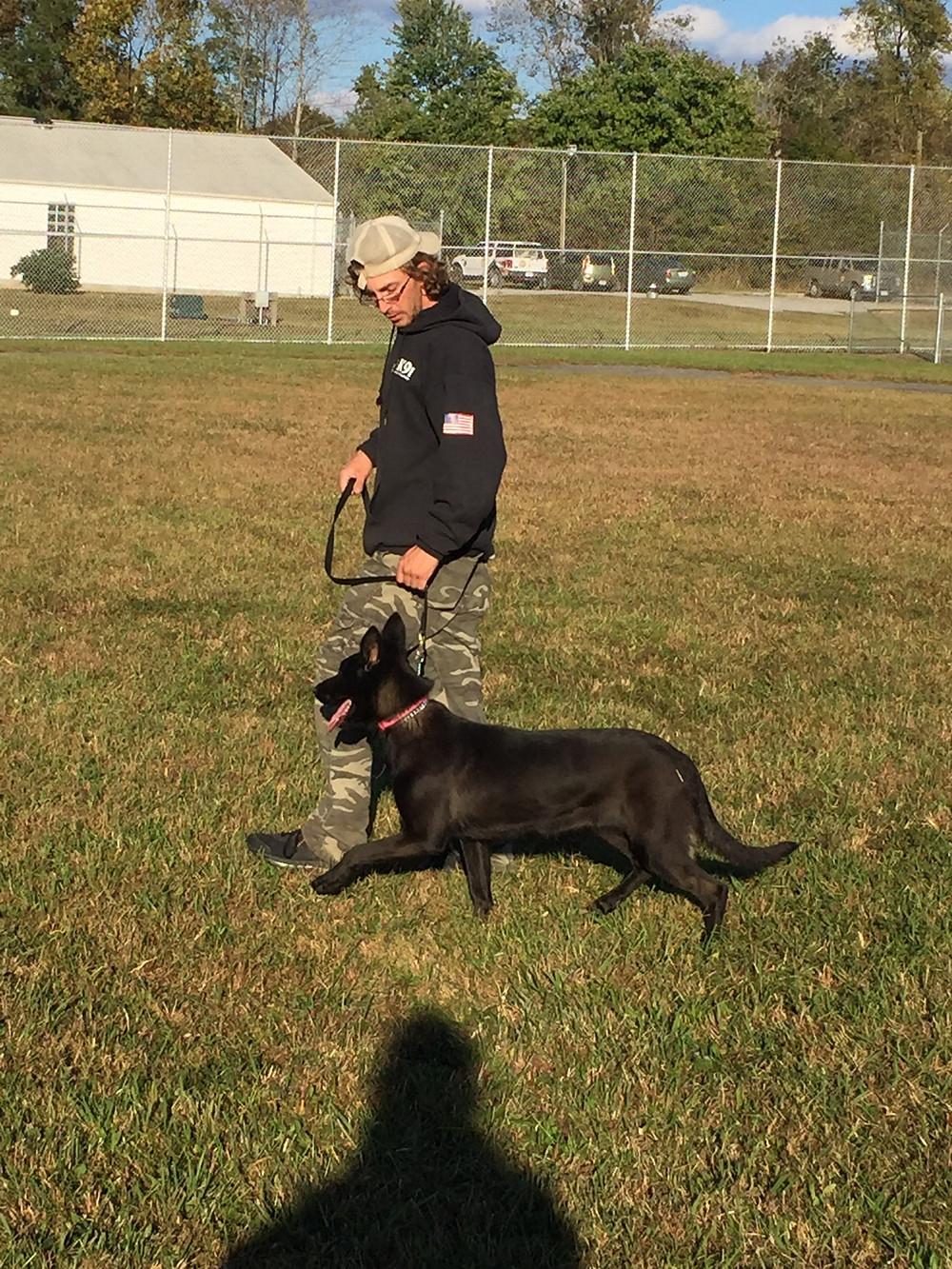 training, trainer, dog trainer.