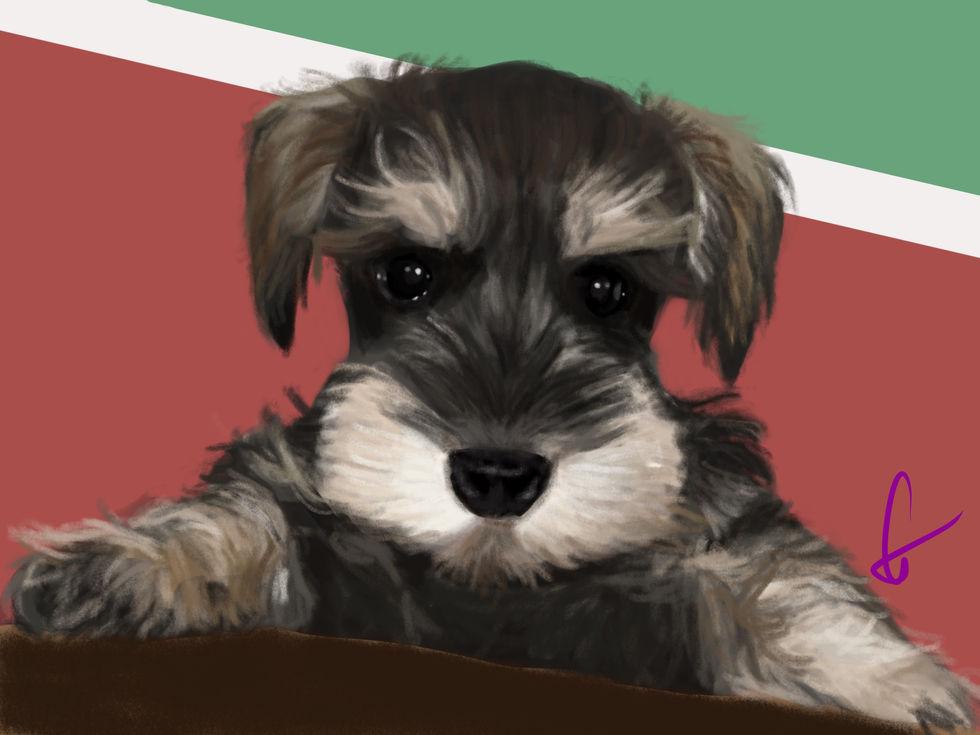 Cher's_dog.jpg