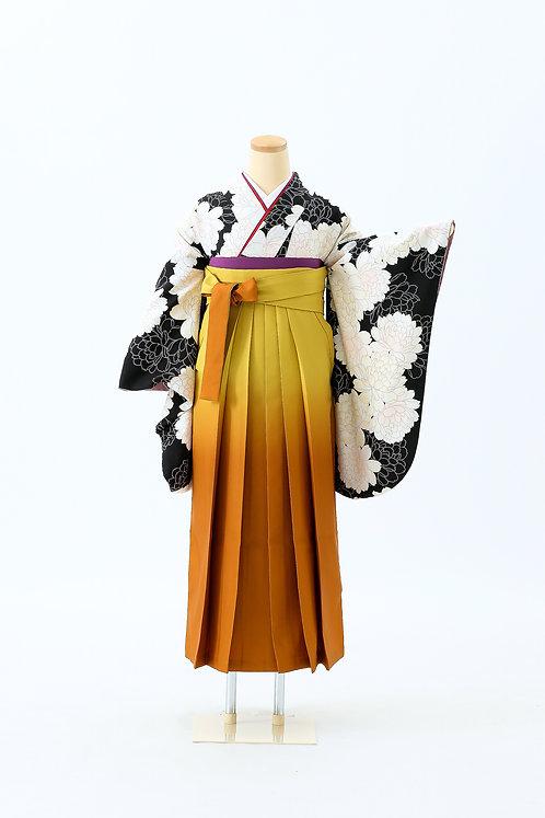 大白菊とオレンジ袴 SH-14