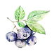 —Pngtree—hand_painted_fruit_blueberr