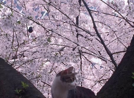 春ですね〜☀︎