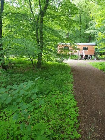 Wald Schleswig