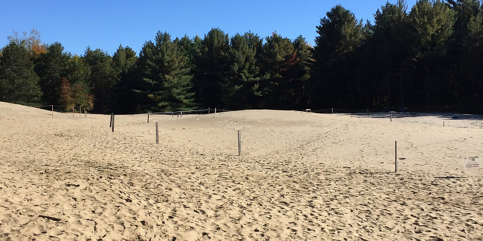 Come and Discover Pinhey Sand Dunes